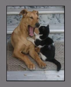 42778-kedi-kopek-gibi
