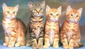 avusturalya-da-1-milyon-kedi-katledilecek-60265-5